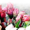 Теперь всегда в продаже свежие цветы!>