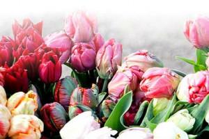 Теперь всегда в продаже свежие цветы!